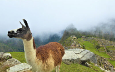 A Magical Journey Through Machu Picchu